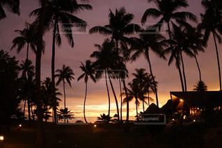 タヒチのランギロア島のヤシの木の写真・画像素材[2217409]