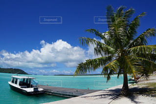 タヒチにてヤシの木に囲まれたボートの写真・画像素材[2217412]