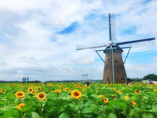 風車とひまわり畑の写真・画像素材[2289165]
