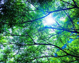 夏の木漏れ日の写真・画像素材[3329201]