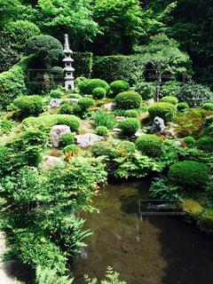 三千院 中庭の写真・画像素材[775503]