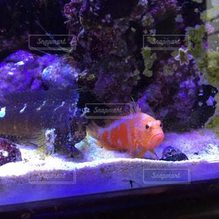 サンゴ水槽と熱帯魚 - No.783627