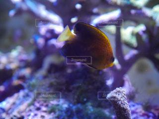 水槽の中を泳ぐ魚たちの写真・画像素材[783721]