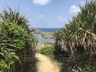 フナウサギバナタの写真・画像素材[1132732]