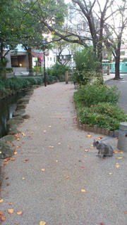 猫とお散歩 - No.781387