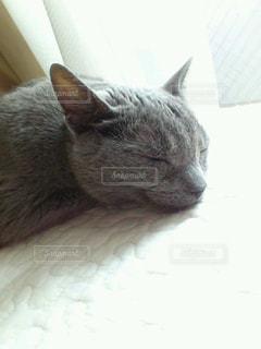 ネコの写真・画像素材[800247]