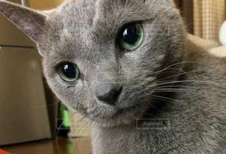 猫のアップの写真・画像素材[800257]