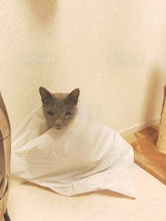 袋が好きな猫の写真・画像素材[825368]