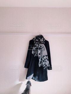 黒いコートと見ている猫の写真・画像素材[873068]