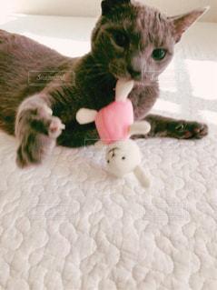 猫とうさぎ6の写真・画像素材[873077]