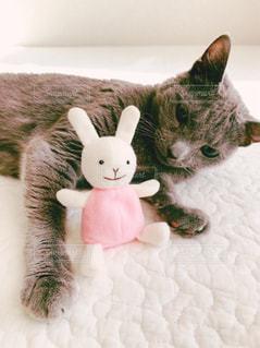 猫とうさぎ3 - No.873081
