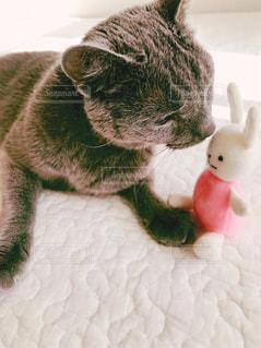 猫とうさぎ2 - No.873082
