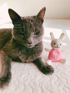 猫とうさぎ1の写真・画像素材[873083]