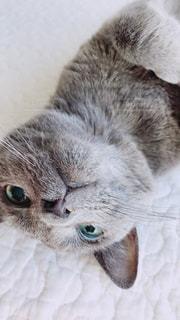 じゃれているネコの写真・画像素材[890180]