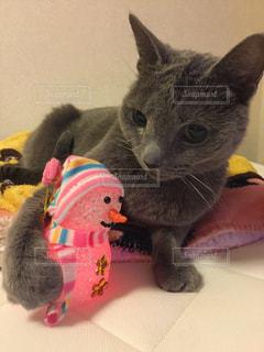 猫とスノーマンの写真・画像素材[929019]