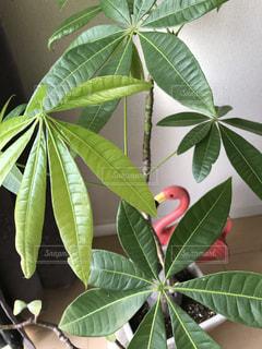 観葉植物とフラミンゴのジョウロの写真・画像素材[938544]
