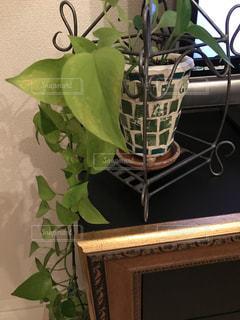 観葉植物の写真・画像素材[938560]