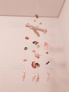 貝の写真・画像素材[938630]