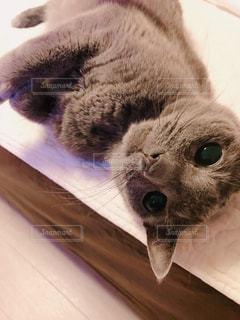 この後猫パンチされたの写真・画像素材[955712]