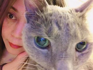 猫と一緒 - No.967072