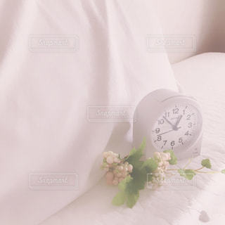 目覚めの写真・画像素材[994723]