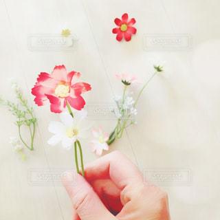 花の写真・画像素材[994726]