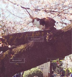 木の上にいた猫 - No.1000718