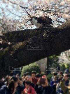 人気者の猫の写真・画像素材[1000799]