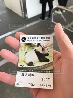 パンダの写真・画像素材[1000889]