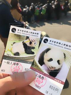 パンダの写真・画像素材[1000890]