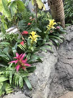 植物の写真・画像素材[1000916]