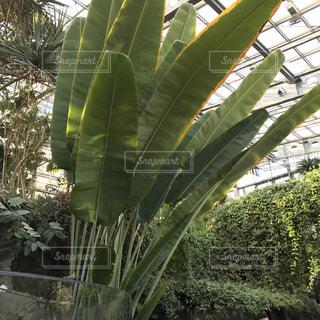 大きな植物の写真・画像素材[1000918]