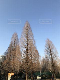 近くの木のアップの写真・画像素材[1001053]