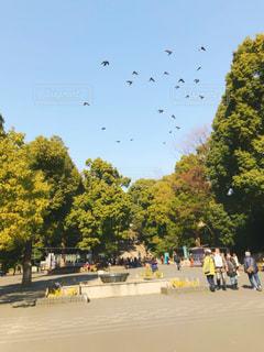 空に舞う鳥の写真・画像素材[1001057]