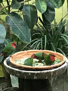エサを食べる鳥の写真・画像素材[1001082]