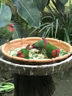 食事をする鳥の写真・画像素材[1001084]