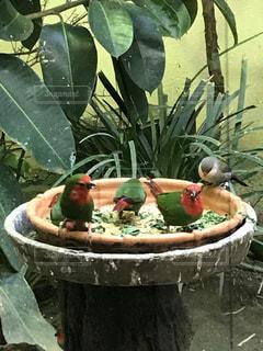 綺麗な色の鳥の写真・画像素材[1001085]