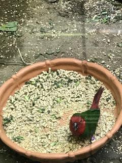エサを食べる鳥の写真・画像素材[1001086]