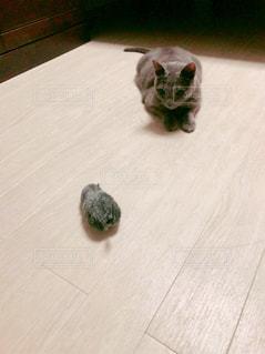 猫とネズミの写真・画像素材[1124940]
