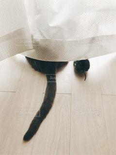 ネコとねずみ一緒に外を眺めるの写真・画像素材[1126685]