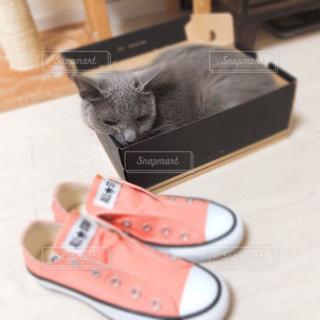箱でくつろぐ猫の写真・画像素材[1322522]
