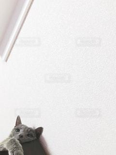 寝そべる猫の写真・画像素材[2483766]