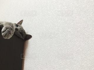 寝そべる猫の写真・画像素材[2483767]