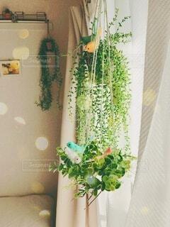窓際の観葉植物の写真・画像素材[4125011]