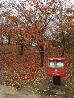 秋のポストの写真・画像素材[775588]