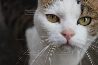 野良猫さん🐈 - No.775600