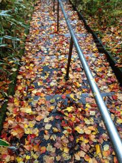 落ち葉の絨毯の写真・画像素材[775799]