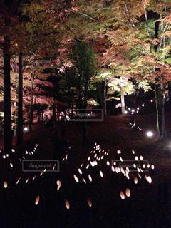 空に花火のグループの写真・画像素材[781591]