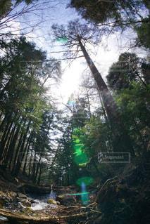 森林浴の写真・画像素材[1108528]