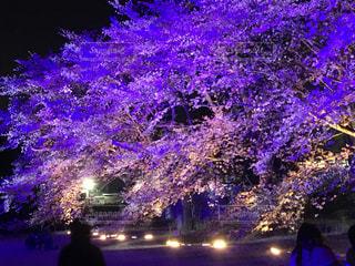 夜桜の写真・画像素材[1108531]